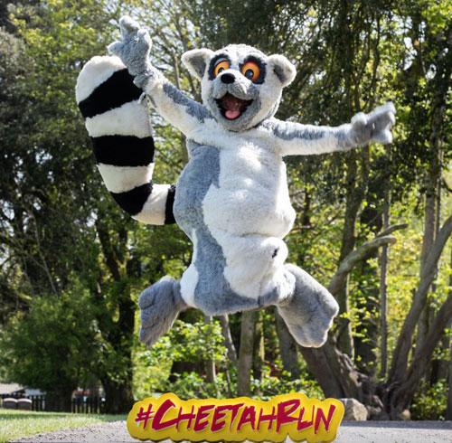 Eagle AC Cheetah Run 2021 goes virtual to raise funds for Fota Wildlife Park
